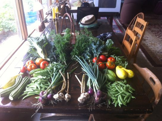 dacha 2016 summer harvest
